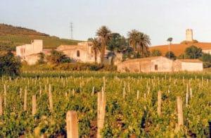 grecanico wine