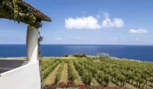 malvasia wine