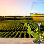 Nine of Sicily's Best Wines
