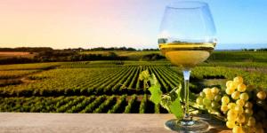 sicily best wine