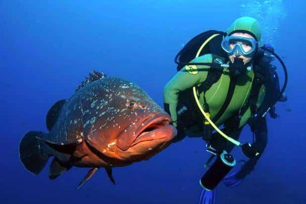 diving in Ustica