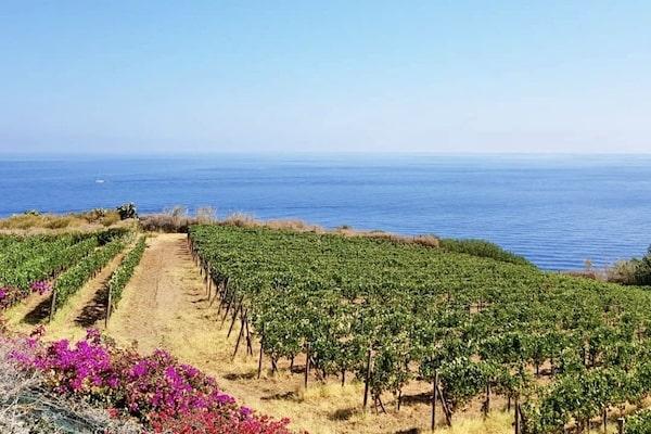 Malvasia and Zibibbo Wine